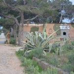 Aloe Vera mit Lost Place